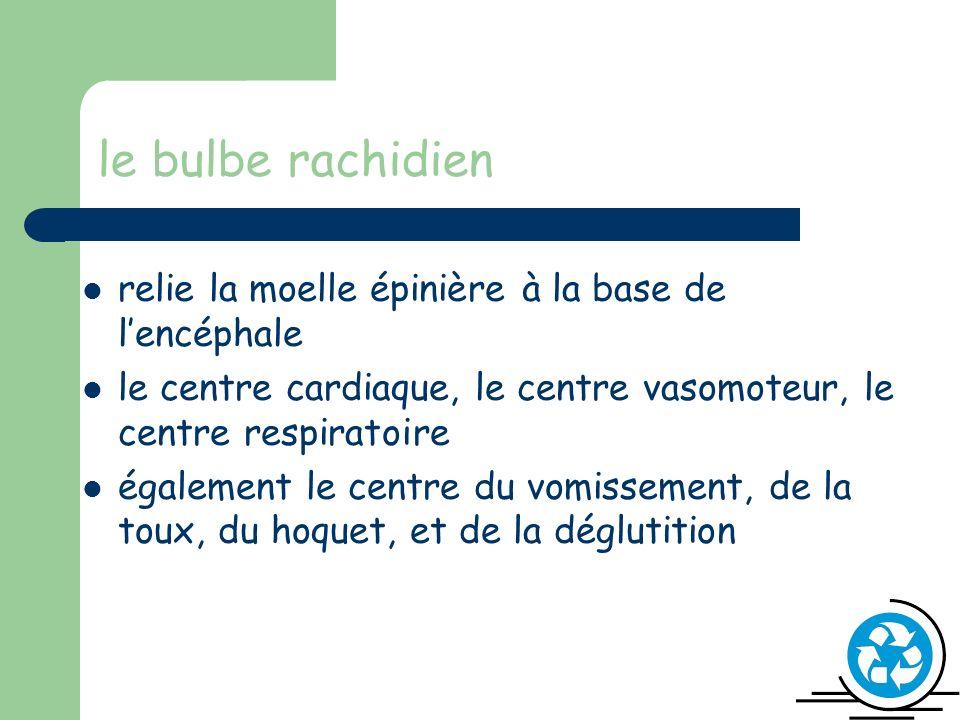 le bulbe rachidien relie la moelle épinière à la base de lencéphale le centre cardiaque, le centre vasomoteur, le centre respiratoire également le centre du vomissement, de la toux, du hoquet, et de la déglutition