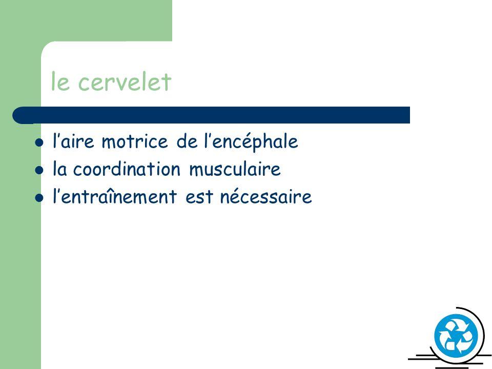 le cervelet laire motrice de lencéphale la coordination musculaire lentraînement est nécessaire