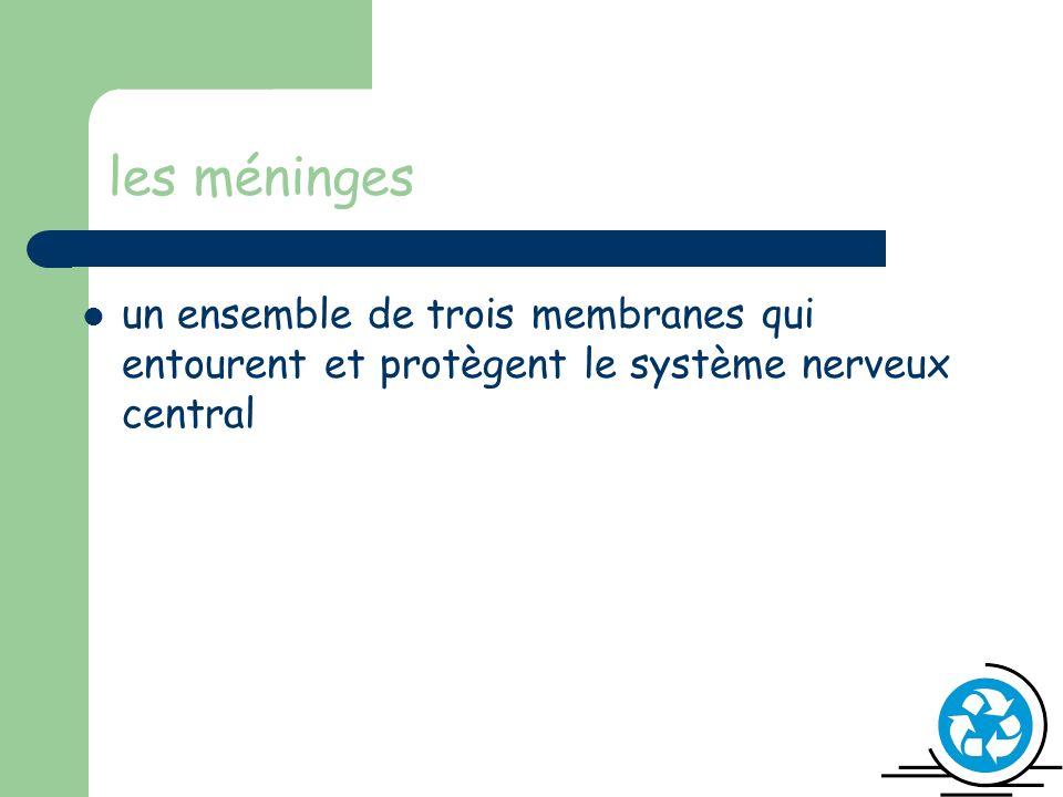 les méninges un ensemble de trois membranes qui entourent et protègent le système nerveux central