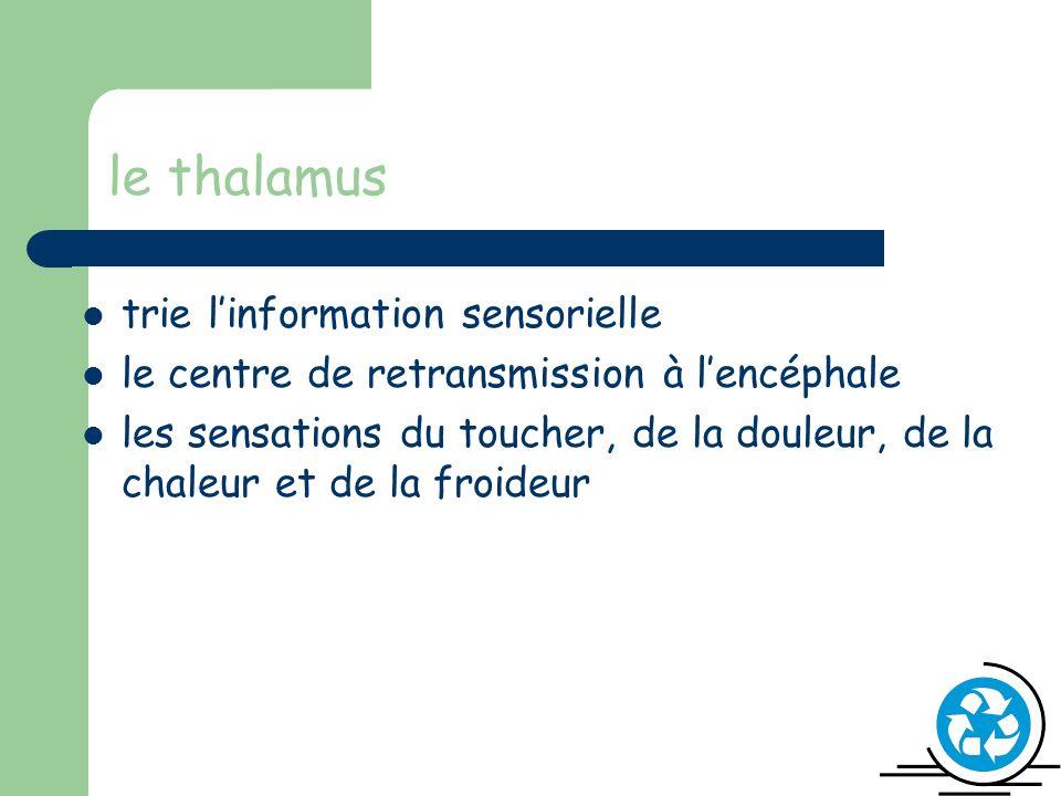 le thalamus trie linformation sensorielle le centre de retransmission à lencéphale les sensations du toucher, de la douleur, de la chaleur et de la froideur