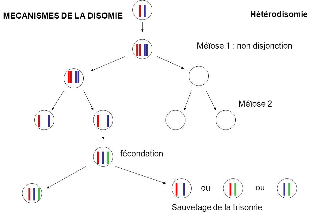 Méïose 1 : non disjonction Méïose 2 ou fécondation Sauvetage de la trisomie Hétérodisomie MECANISMES DE LA DISOMIE