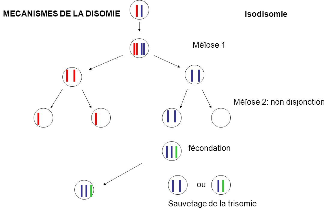 Méïose 1 Méïose 2: non disjonction ou fécondation Sauvetage de la trisomie Isodisomie MECANISMES DE LA DISOMIE