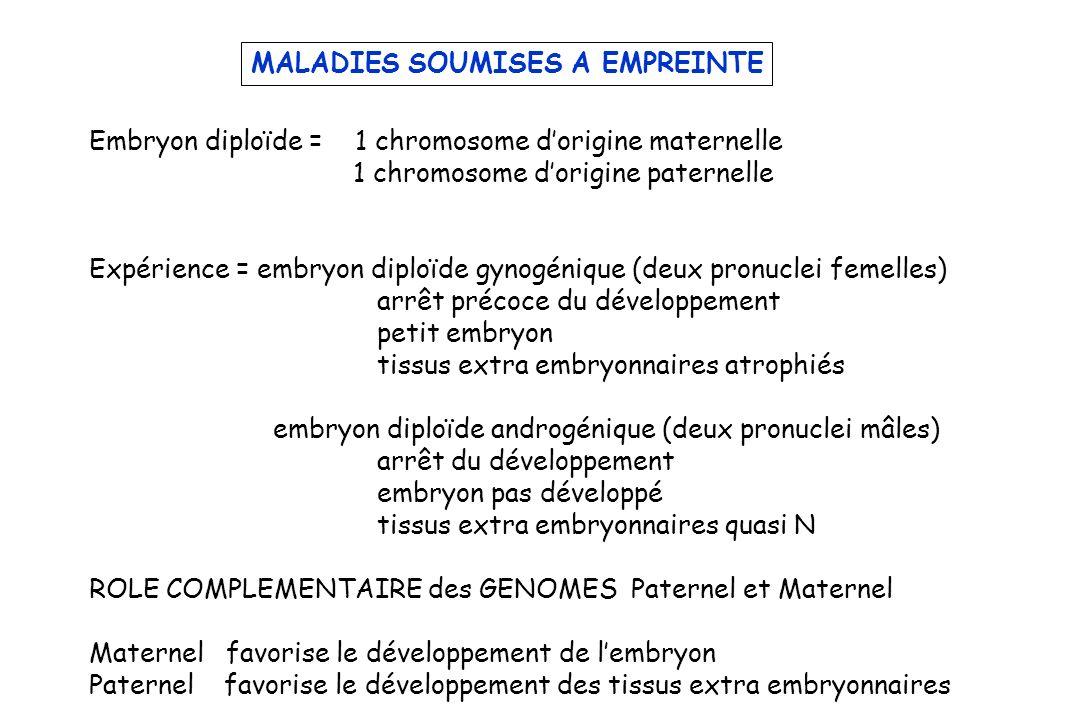 MALADIES SOUMISES A EMPREINTE Embryon diploïde = 1 chromosome dorigine maternelle 1 chromosome dorigine paternelle Expérience = embryon diploïde gynogénique (deux pronuclei femelles) arrêt précoce du développement petit embryon tissus extra embryonnaires atrophiés embryon diploïde androgénique (deux pronuclei mâles) arrêt du développement embryon pas développé tissus extra embryonnaires quasi N ROLE COMPLEMENTAIRE des GENOMES Paternel et Maternel Maternel favorise le développement de lembryon Paternel favorise le développement des tissus extra embryonnaires