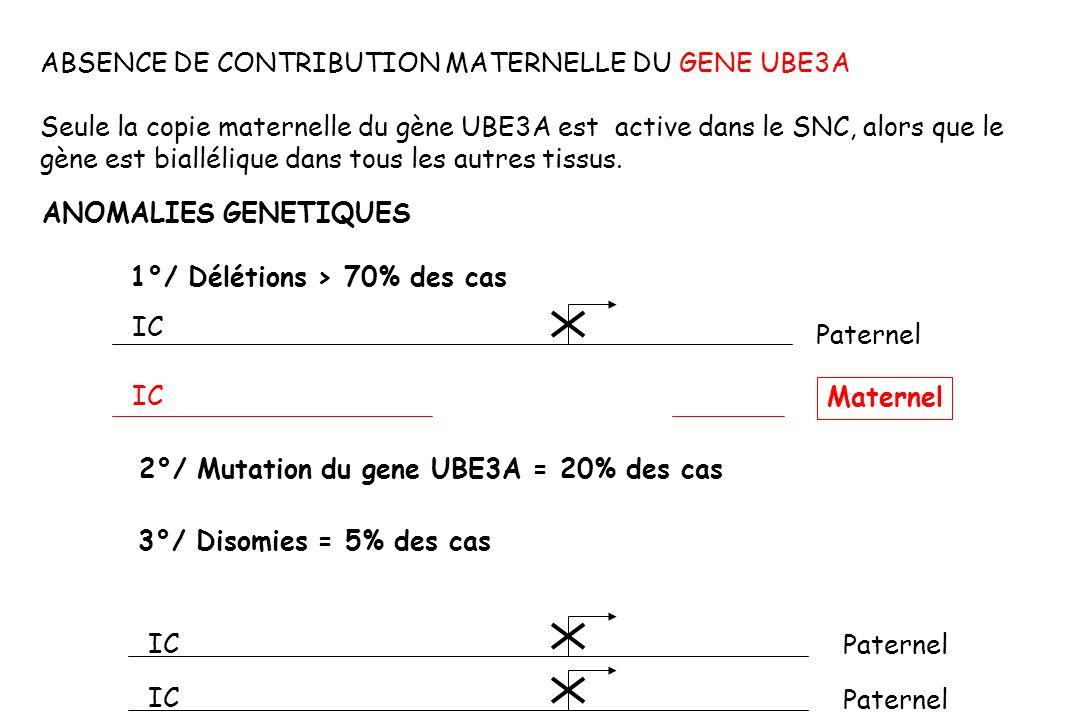 ABSENCE DE CONTRIBUTION MATERNELLE DU GENE UBE3A Seule la copie maternelle du gène UBE3A est active dans le SNC, alors que le gène est biallélique dans tous les autres tissus.