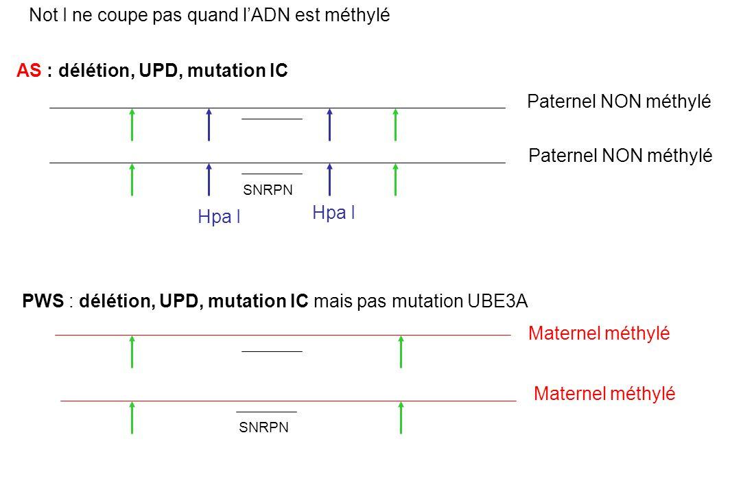 Hpa I Paternel NON méthylé Maternel méthylé SNRPN Not I ne coupe pas quand lADN est méthylé AS : délétion, UPD, mutation IC PWS : délétion, UPD, mutation IC mais pas mutation UBE3A Hpa I
