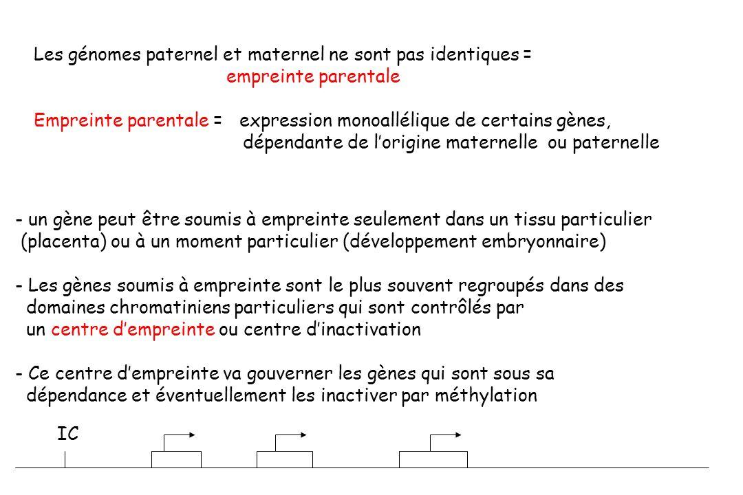 Les génomes paternel et maternel ne sont pas identiques = empreinte parentale Empreinte parentale = expression monoallélique de certains gènes, dépendante de lorigine maternelle ou paternelle - un gène peut être soumis à empreinte seulement dans un tissu particulier (placenta) ou à un moment particulier (développement embryonnaire) - Les gènes soumis à empreinte sont le plus souvent regroupés dans des domaines chromatiniens particuliers qui sont contrôlés par un centre dempreinte ou centre dinactivation - Ce centre dempreinte va gouverner les gènes qui sont sous sa dépendance et éventuellement les inactiver par méthylation IC