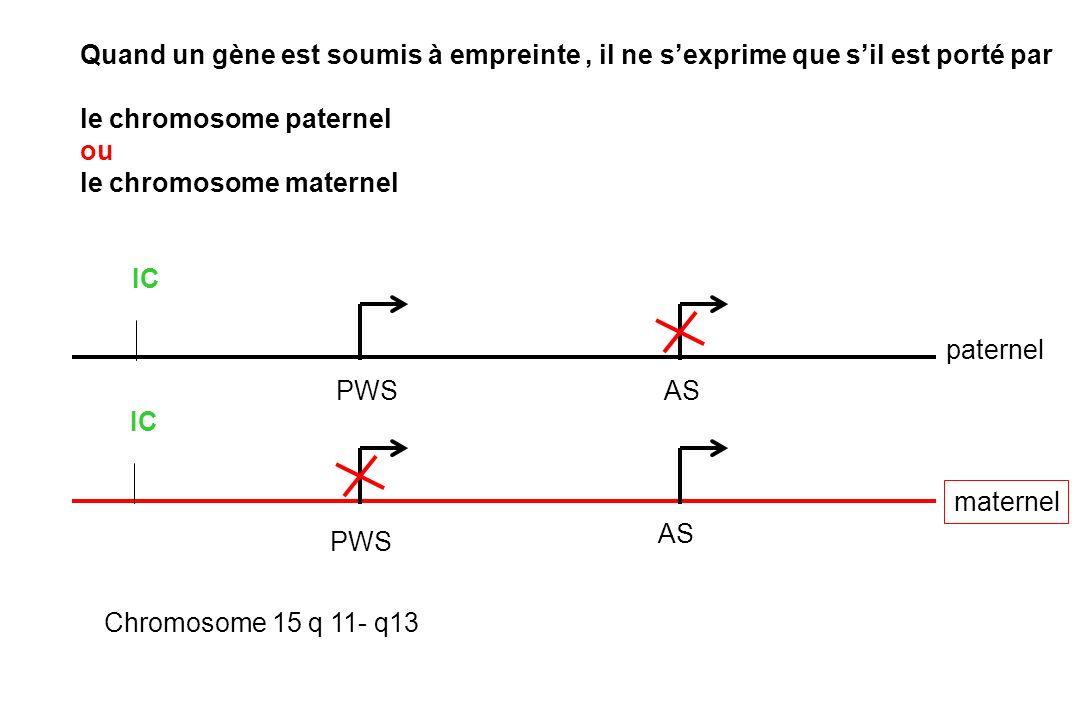 paternel maternel Quand un gène est soumis à empreinte, il ne sexprime que sil est porté par le chromosome paternel ou le chromosome maternel PWS AS IC PWS AS IC Chromosome 15 q 11- q13
