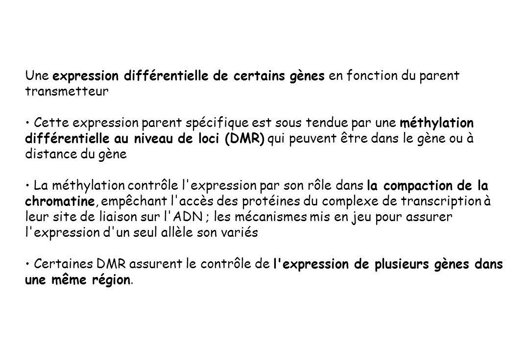 Une expression différentielle de certains gènes en fonction du parent transmetteur Cette expression parent spécifique est sous tendue par une méthylat