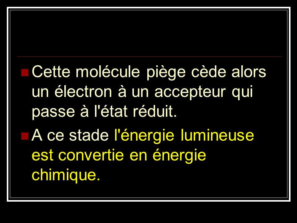 Cette molécule piège cède alors un électron à un accepteur qui passe à l'état réduit. A ce stade l'énergie lumineuse est convertie en énergie chimique