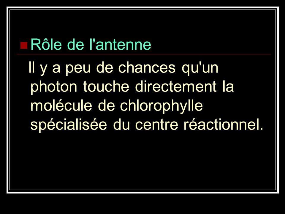 Rôle de l'antenne ll y a peu de chances qu'un photon touche directement la molécule de chlorophylle spécialisée du centre réactionnel.