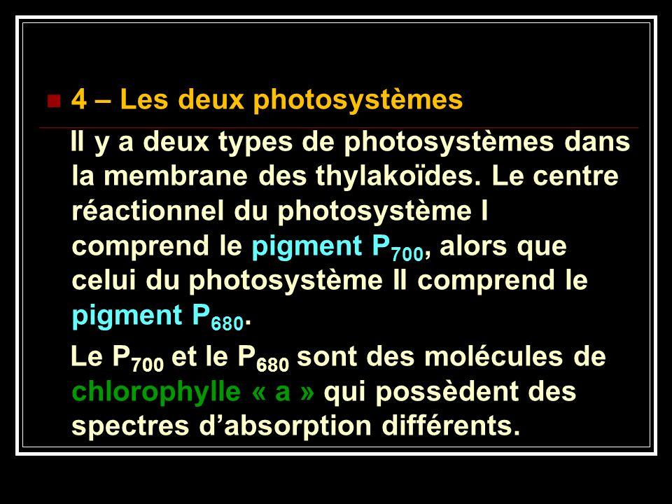 4 – Les deux photosystèmes Il y a deux types de photosystèmes dans la membrane des thylakoïdes. Le centre réactionnel du photosystème I comprend le pi