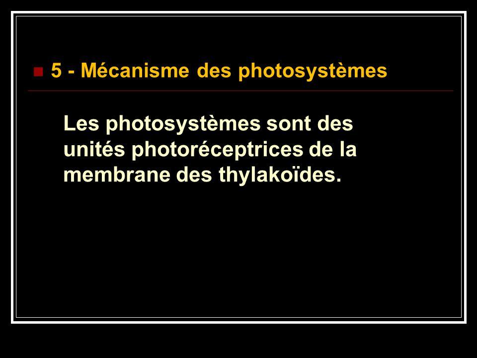 5 - Mécanisme des photosystèmes Les photosystèmes sont des unités photoréceptrices de la membrane des thylakoïdes.