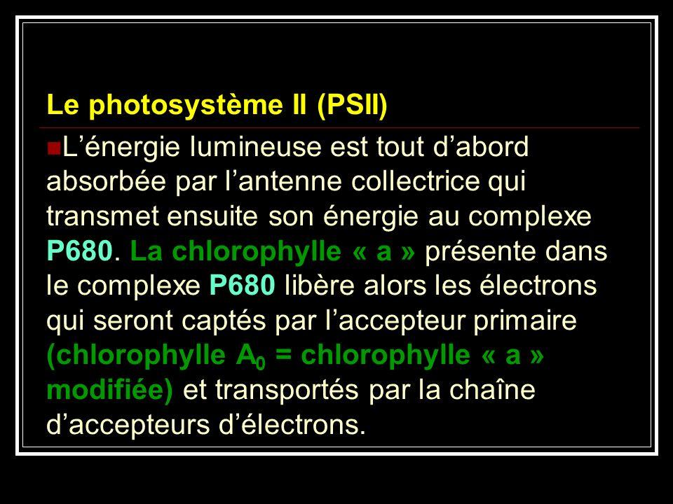 Le photosystème II (PSII) Lénergie lumineuse est tout dabord absorbée par lantenne collectrice qui transmet ensuite son énergie au complexe P680. La c