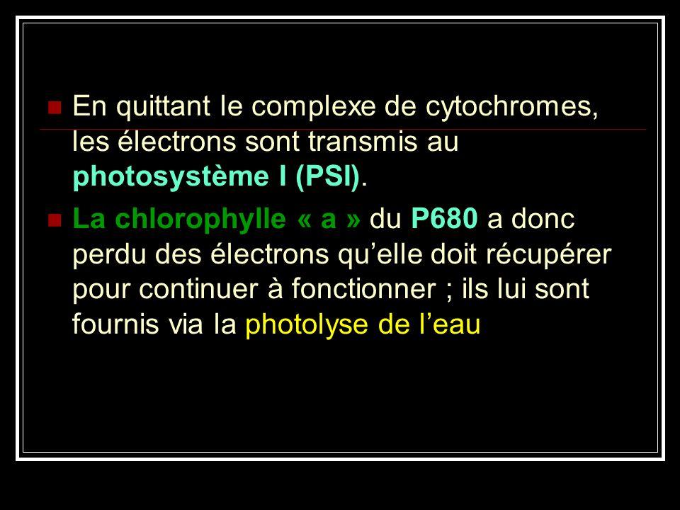 En quittant le complexe de cytochromes, les électrons sont transmis au photosystème I (PSI). La chlorophylle « a » du P680 a donc perdu des électrons