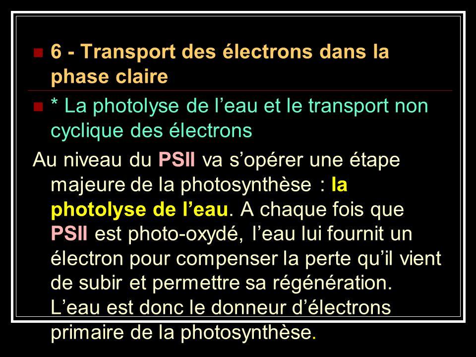 6 - Transport des électrons dans la phase claire * La photolyse de leau et le transport non cyclique des électrons Au niveau du PSII va sopérer une ét