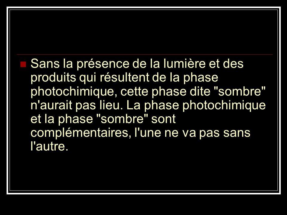 Sans la présence de la lumière et des produits qui résultent de la phase photochimique, cette phase dite