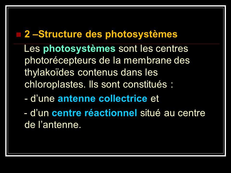 2 –Structure des photosystèmes Les photosystèmes sont les centres photorécepteurs de la membrane des thylakoïdes contenus dans les chloroplastes. Ils