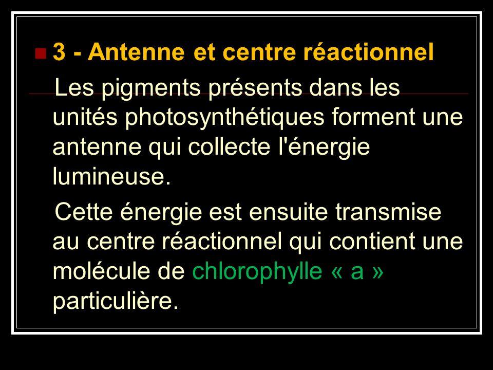 3 - Antenne et centre réactionnel Les pigments présents dans les unités photosynthétiques forment une antenne qui collecte l'énergie lumineuse. Cette