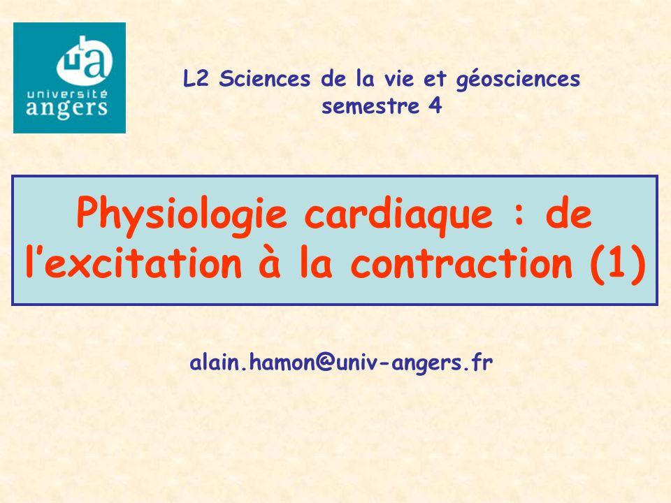 Physiologie cardiaque : de lexcitation à la contraction (1) alain.hamon@univ-angers.fr L2 Sciences de la vie et géosciences semestre 4