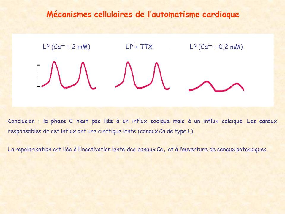 Mécanismes cellulaires de lautomatisme cardiaque LP (Ca ++ = 2 mM)LP + TTXLP (Ca ++ = 0,2 mM) Conclusion : la phase 0 nest pas liée à un influx sodiqu