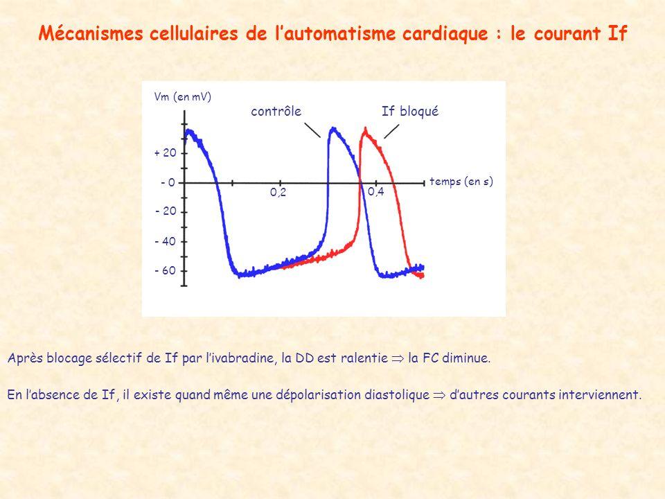 Mécanismes cellulaires de lautomatisme cardiaque : le courant If Après blocage sélectif de If par livabradine, la DD est ralentie la FC diminue. En la