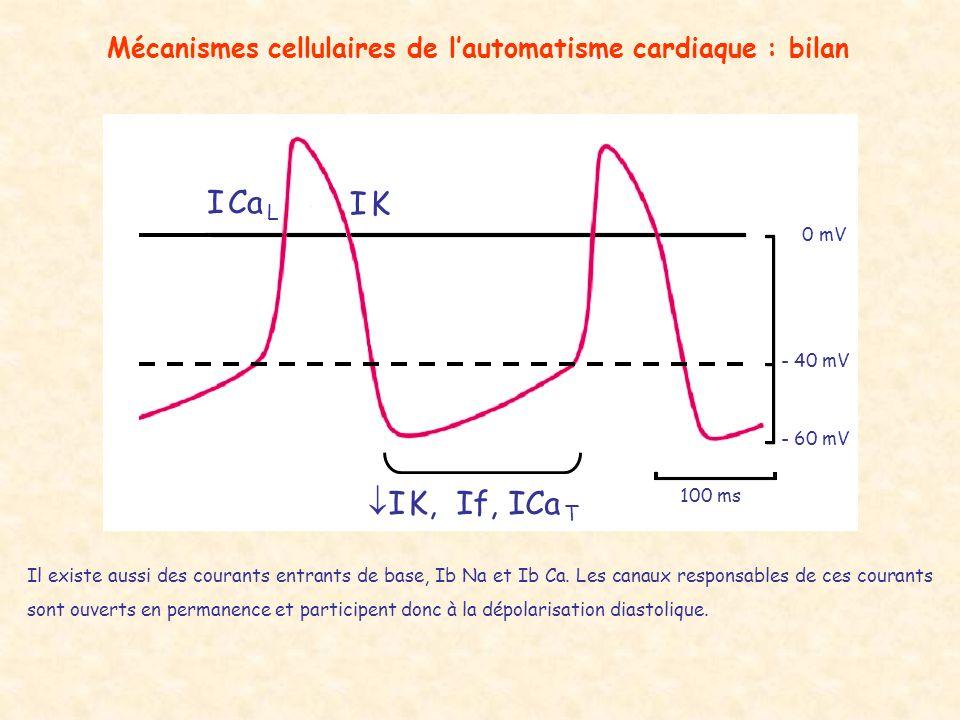 Mécanismes cellulaires de lautomatisme cardiaque : bilan - 60 mV - 40 mV 0 mV 100 ms I Ca L I KI K I K, If, ICa T Il existe aussi des courants entrant