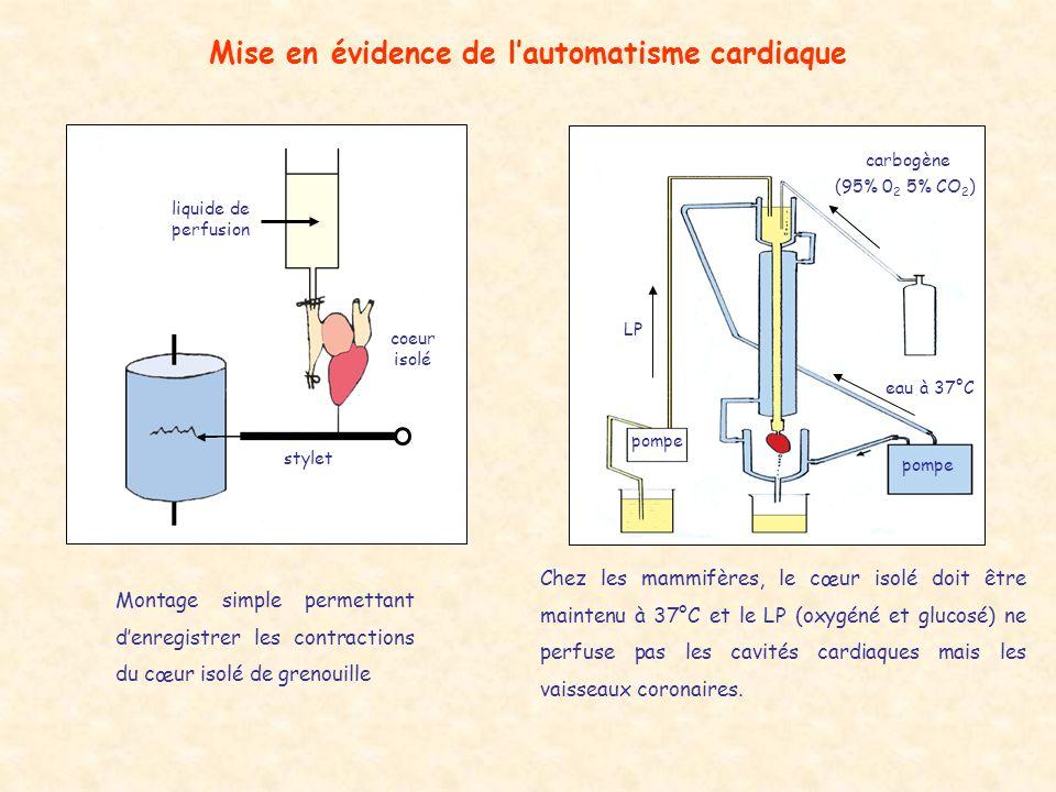 Mise en évidence de lautomatisme cardiaque liquide de perfusion coeur isolé stylet Montage simple permettant denregistrer les contractions du cœur iso