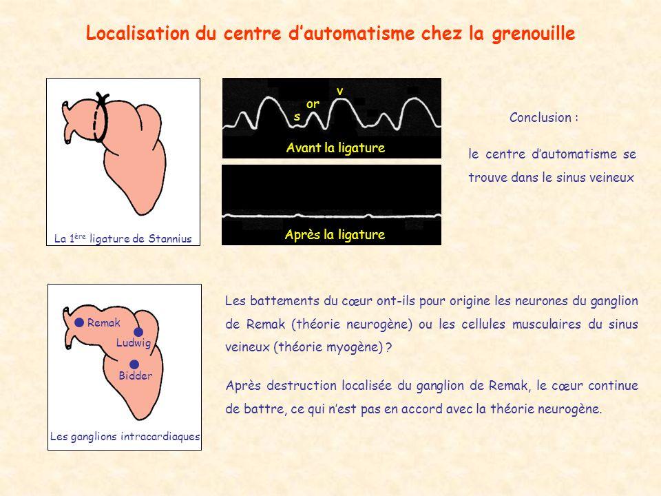 Localisation du centre dautomatisme chez la grenouille La 1 ère ligature de Stannius Avant la ligature s or v Après la ligature Les ganglions intracar