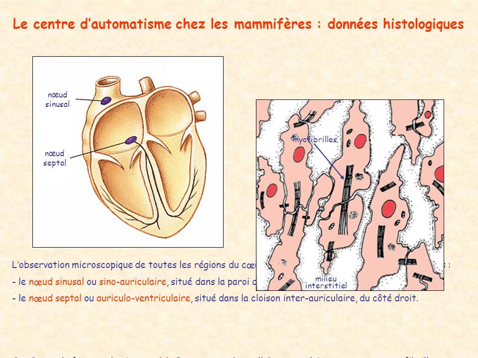 Le centre dautomatisme chez les mammifères : données histologiques nœud sinusal nœud septal Lobservation microscopique de toutes les régions du cœur p