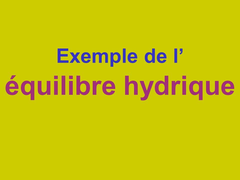 Exemple de l équilibre hydrique