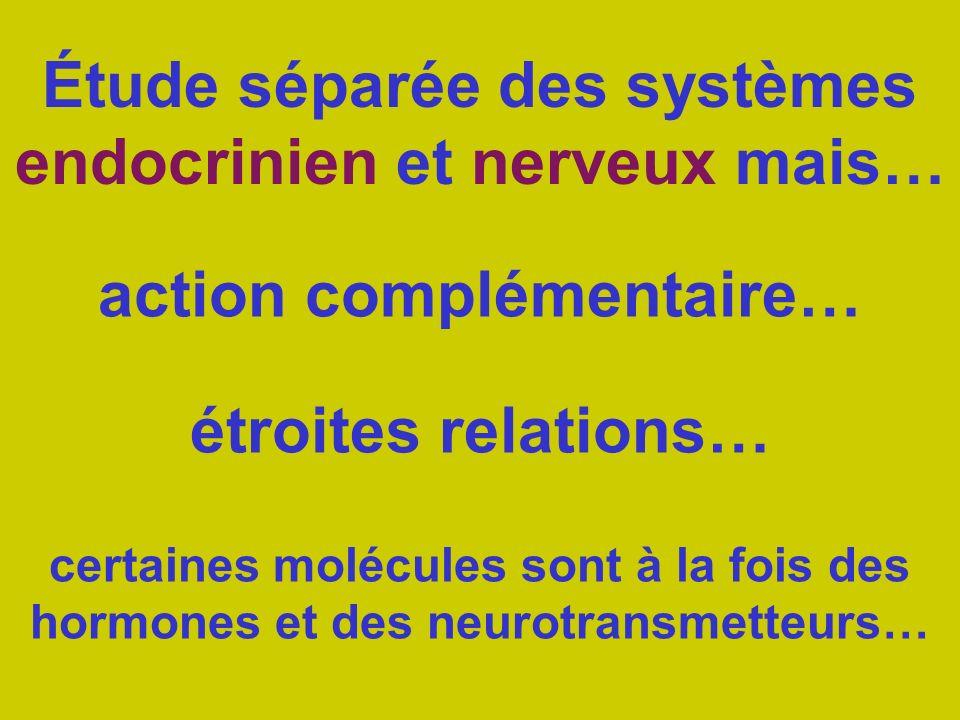 Étude séparée des systèmes endocrinien et nerveux mais… action complémentaire… étroites relations… certaines molécules sont à la fois des hormones et des neurotransmetteurs…