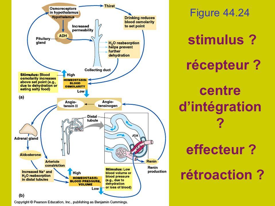 Figure 44.24 stimulus ? récepteur ? centre dintégration ? effecteur ? rétroaction ?
