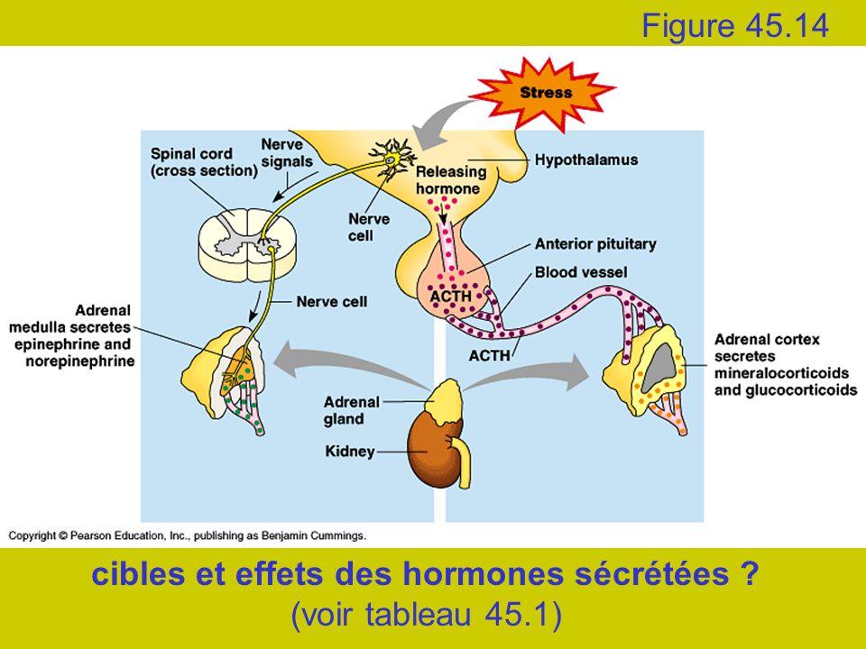 cibles et effets des hormones sécrétées ? (voir tableau 45.1) Figure 45.14