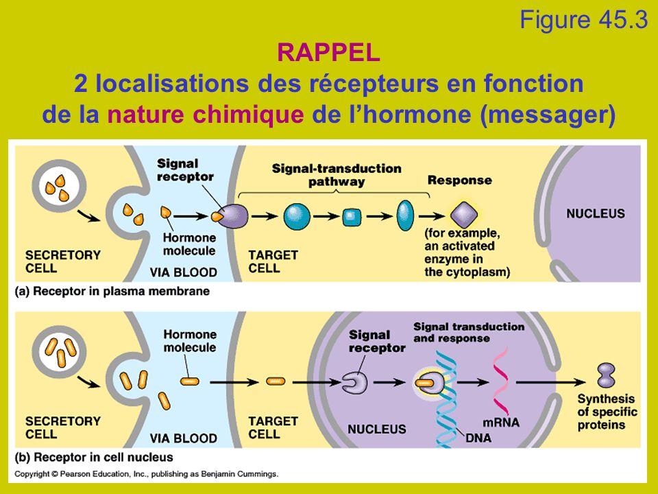 Figure 45.3 RAPPEL 2 localisations des récepteurs en fonction de la nature chimique de lhormone (messager)