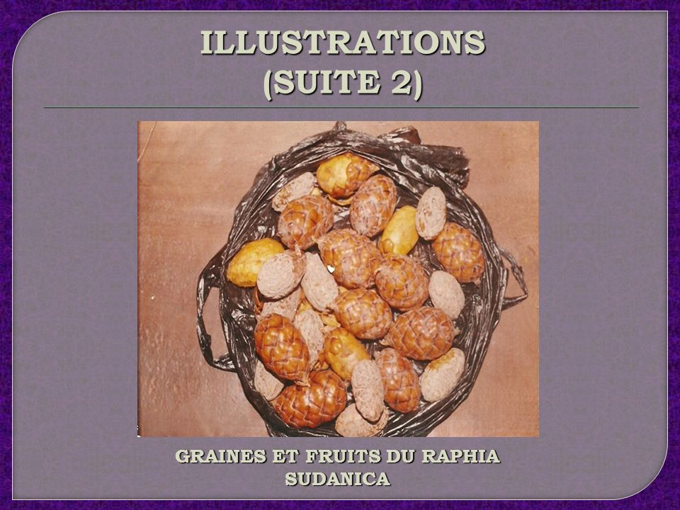 ILLUSTRATIONS (SUITE 1) CULTURE DU RAPHIA SUDANICA (BENEFICIAIRES)