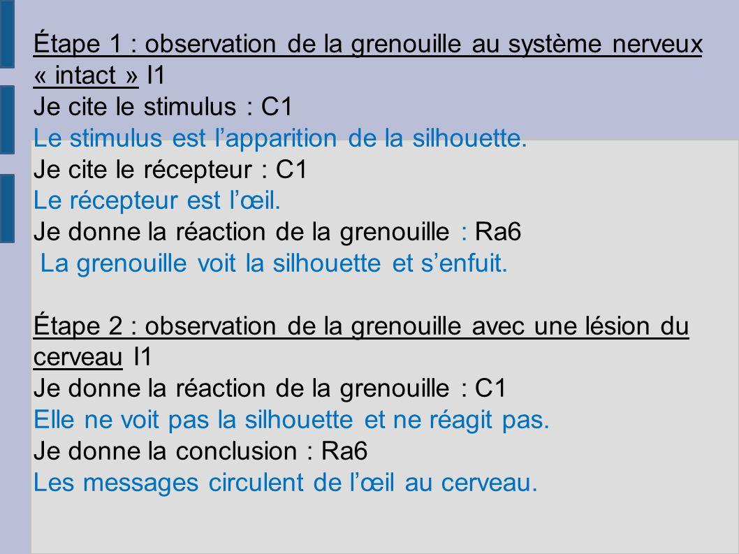 Étape 1 : observation de la grenouille au système nerveux « intact » I1 Je cite le stimulus : C1 Le stimulus est lapparition de la silhouette.