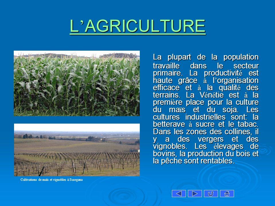 L AGRICULTURE L AGRICULTURE La plupart de la population travaille dans le secteur primaire. La productivit é est haute grâce à l organisation efficace