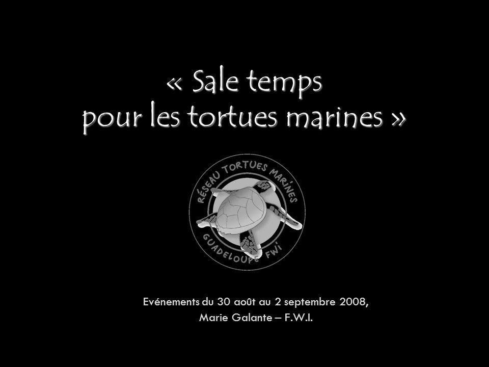 « Sale temps pour les tortues marines » Evénements du 30 août au 2 septembre 2008, Marie Galante – F.W.I.