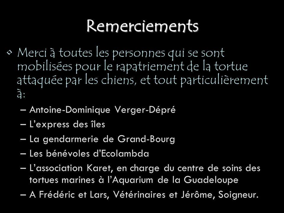 Remerciements Merci à toutes les personnes qui se sont mobilisées pour le rapatriement de la tortue attaquée par les chiens, et tout particulièrement à: –Antoine-Dominique Verger-Dépré –Lexpress des îles –La gendarmerie de Grand-Bourg –Les bénévoles dEcolambda –Lassociation Karet, en charge du centre de soins des tortues marines à lAquarium de la Guadeloupe –A Frédéric et Lars, Vétérinaires et Jérôme, Soigneur.