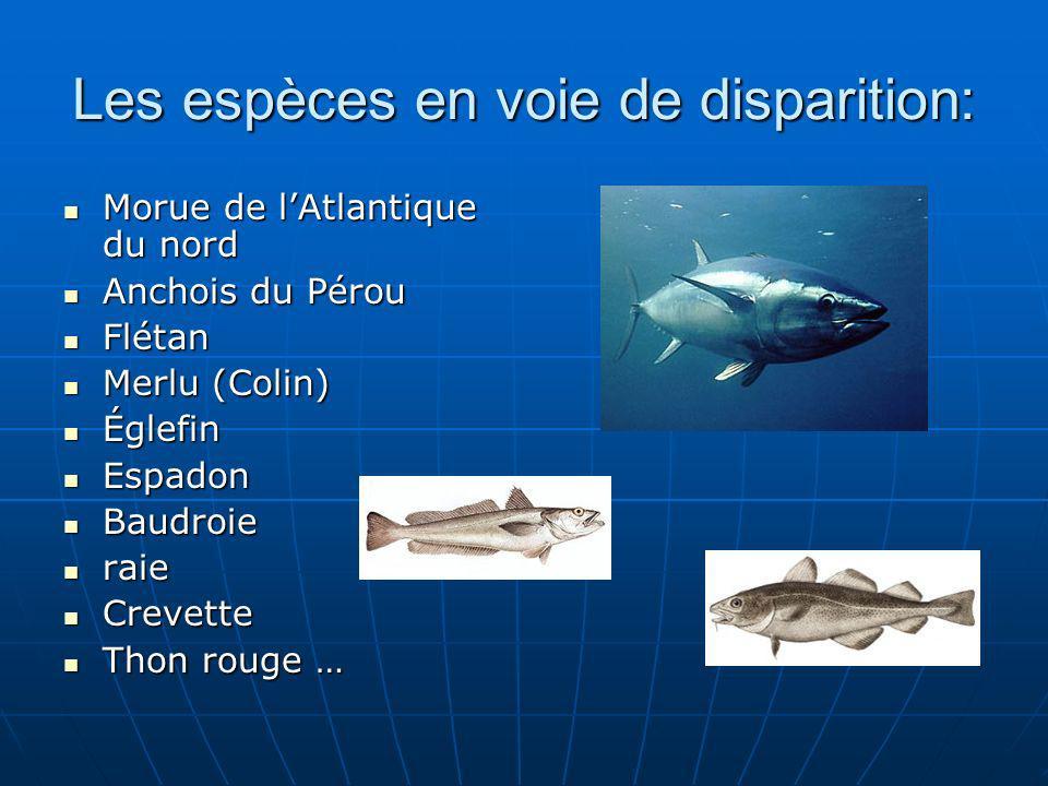 Les espèces en voie de disparition: Morue de lAtlantique du nord Morue de lAtlantique du nord Anchois du Pérou Anchois du Pérou Flétan Flétan Merlu (C