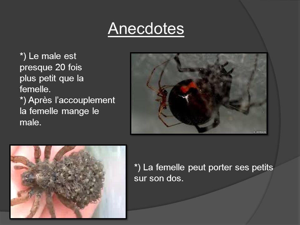 Anecdotes *) Le male est presque 20 fois plus petit que la femelle. *) Après laccouplement la femelle mange le male. *) La femelle peut porter ses pet