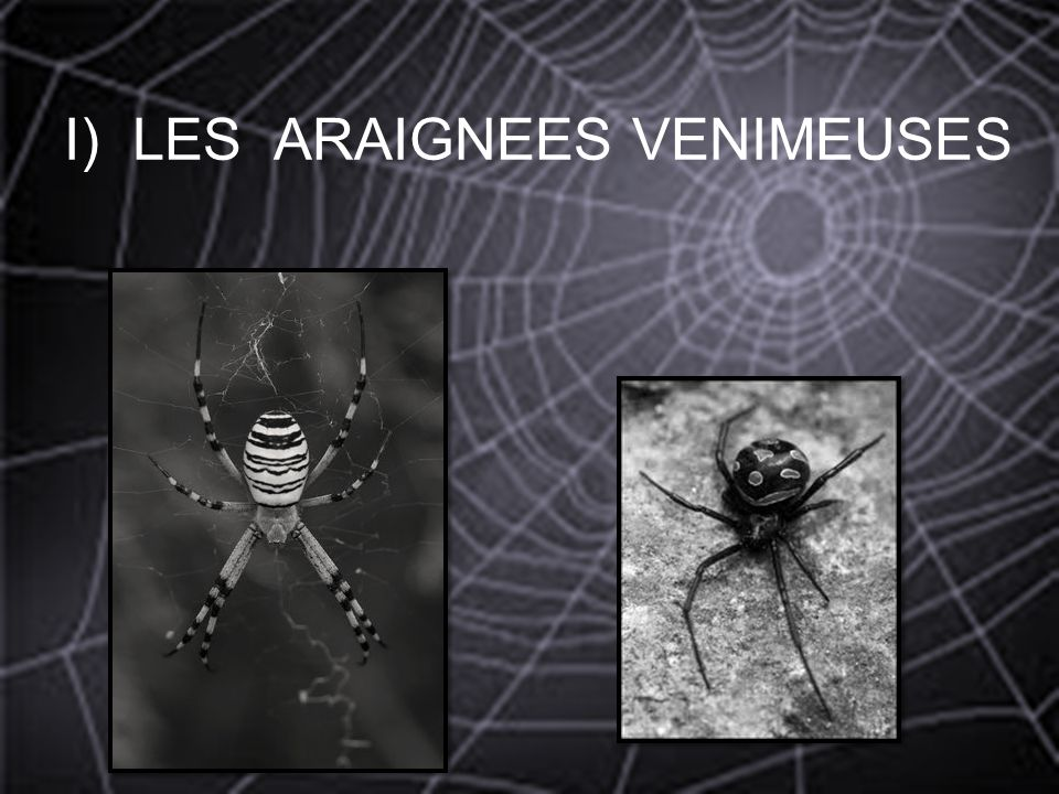 I) LES ARAIGNEES VENIMEUSES