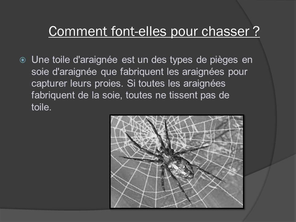 Comment font-elles pour chasser ? Une toile d'araignée est un des types de pièges en soie d'araignée que fabriquent les araignées pour capturer leurs