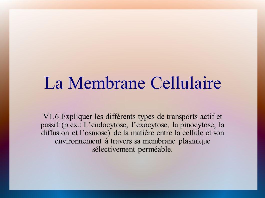 La Membrane Cellulaire V1.6 Expliquer les différents types de transports actif et passif (p.ex.: Lendocytose, lexocytose, la pinocytose, la diffusion et losmose) de la matière entre la cellule et son environnement à travers sa membrane plasmique sélectivement perméable.