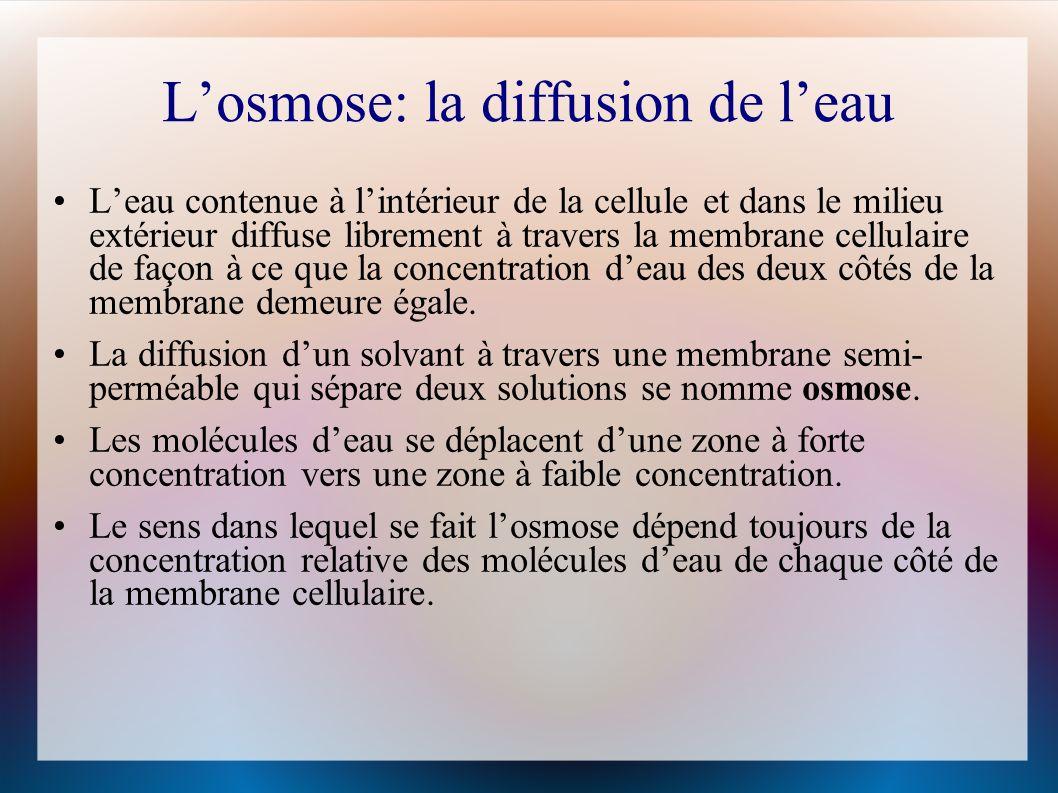 Losmose: la diffusion de leau Leau contenue à lintérieur de la cellule et dans le milieu extérieur diffuse librement à travers la membrane cellulaire de façon à ce que la concentration deau des deux côtés de la membrane demeure égale.