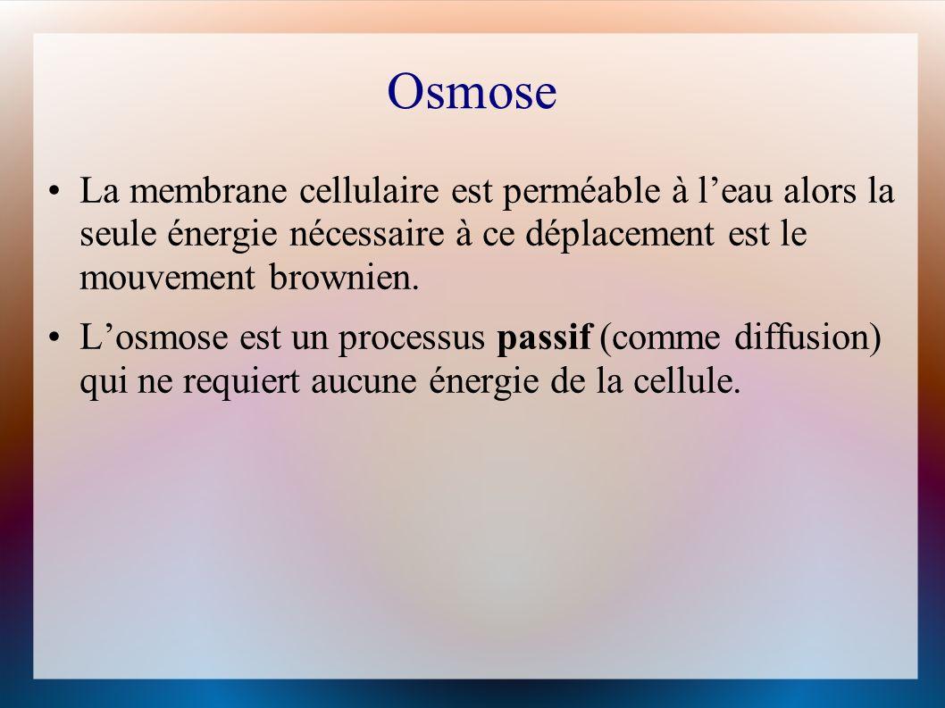 Osmose La membrane cellulaire est perméable à leau alors la seule énergie nécessaire à ce déplacement est le mouvement brownien.