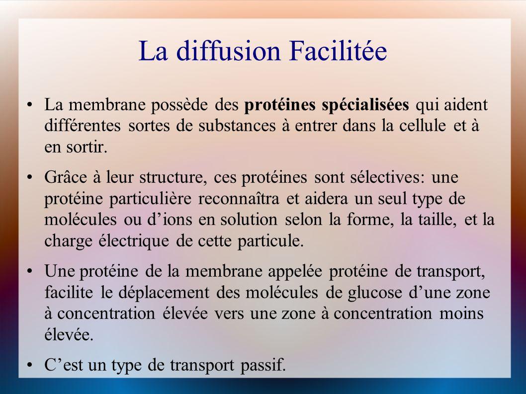 La diffusion Facilitée La membrane possède des protéines spécialisées qui aident différentes sortes de substances à entrer dans la cellule et à en sortir.
