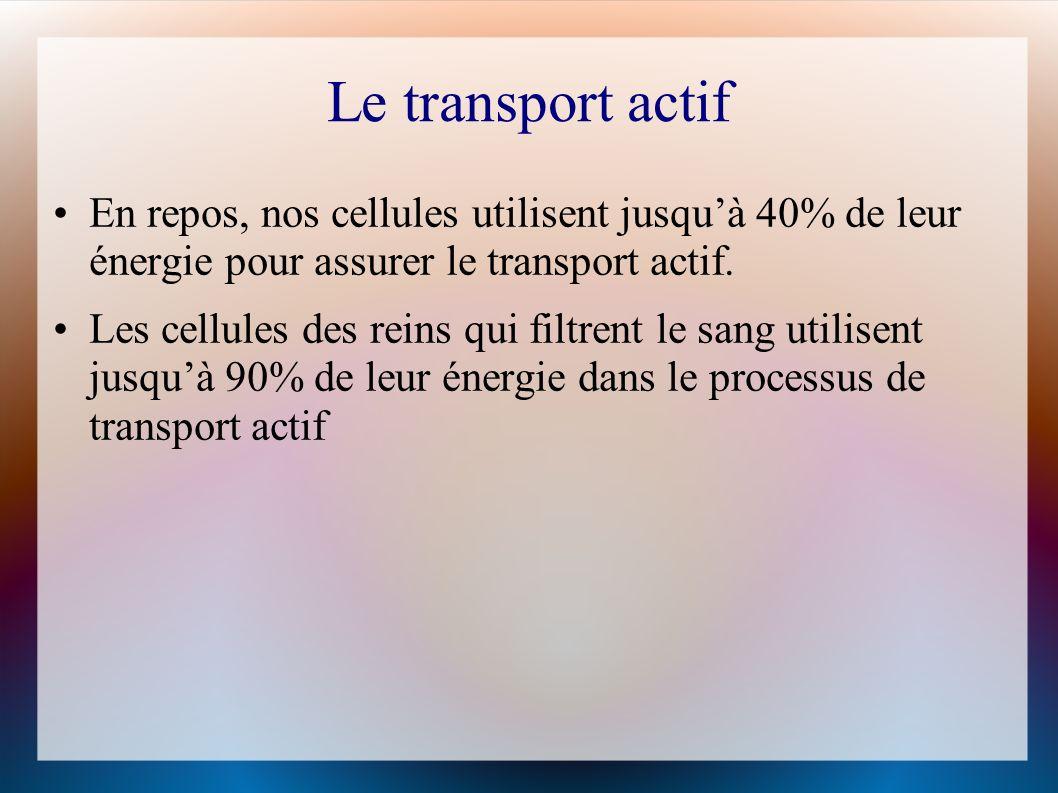 Le transport actif En repos, nos cellules utilisent jusquà 40% de leur énergie pour assurer le transport actif.