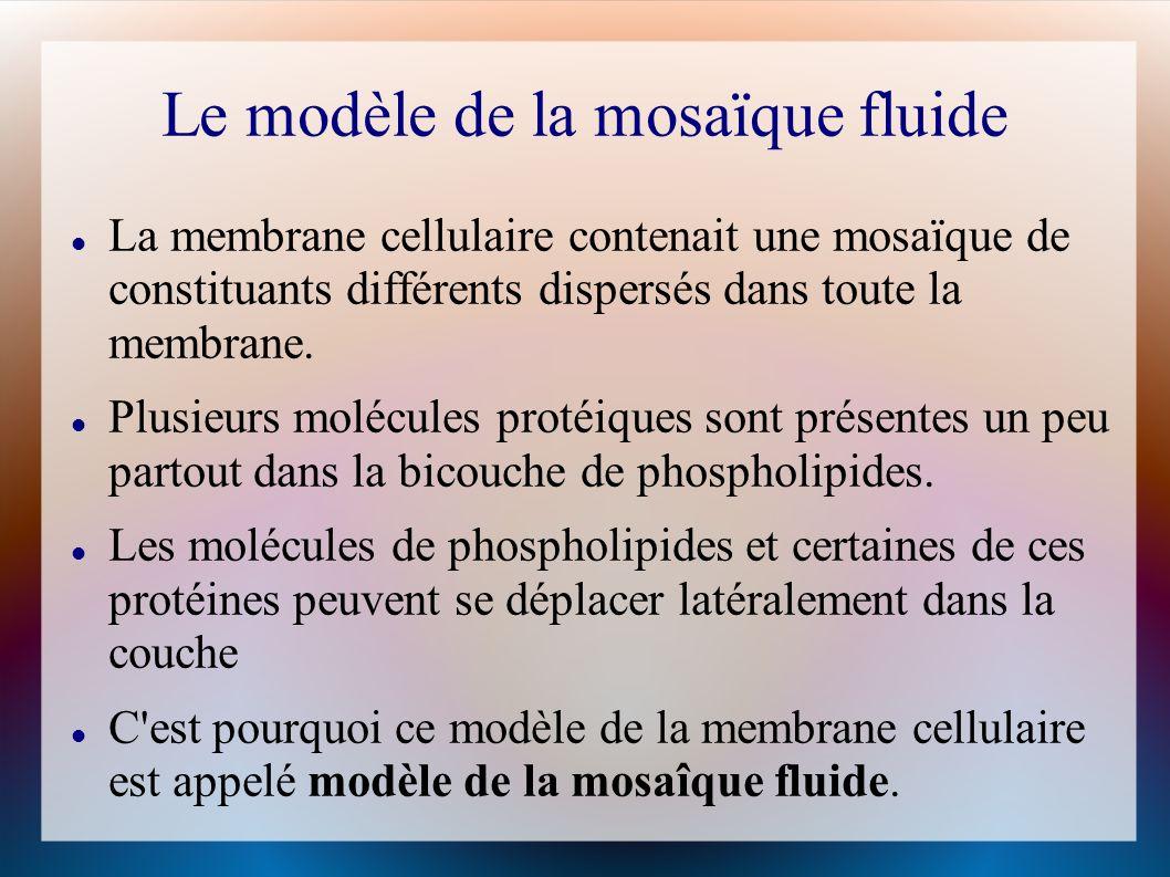 Le modèle de la mosaïque fluide La membrane cellulaire contenait une mosaïque de constituants différents dispersés dans toute la membrane.