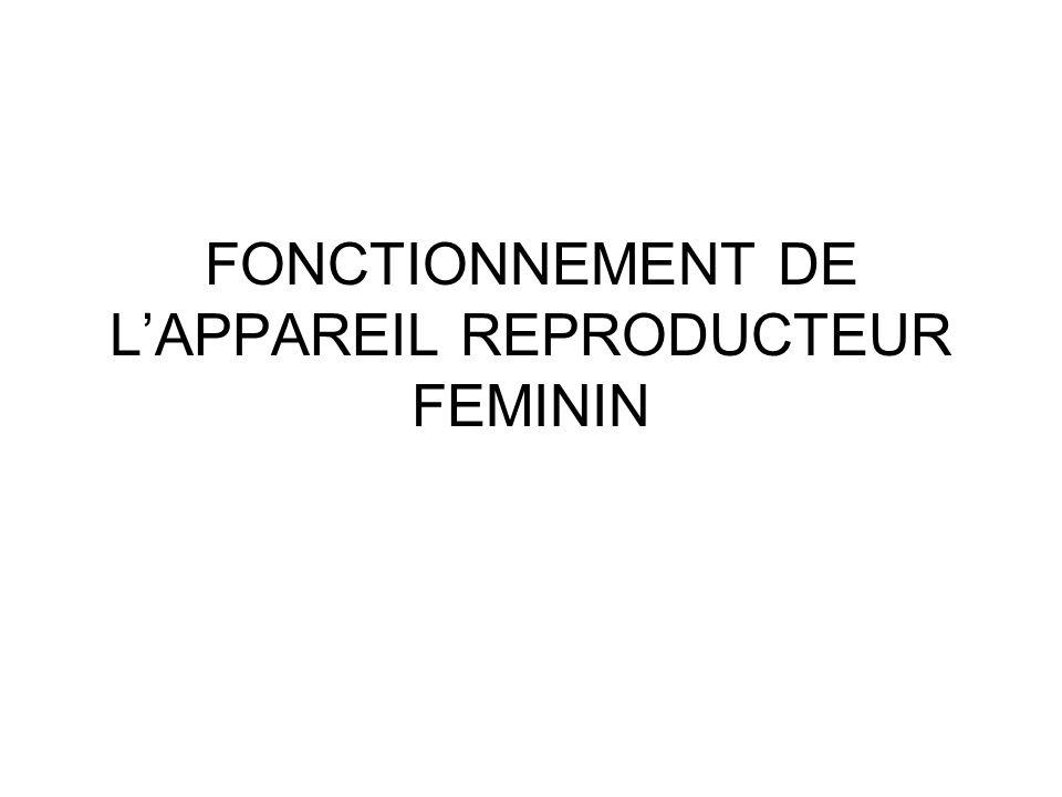 FONCTIONNEMENT DE LAPPAREIL REPRODUCTEUR FEMININ
